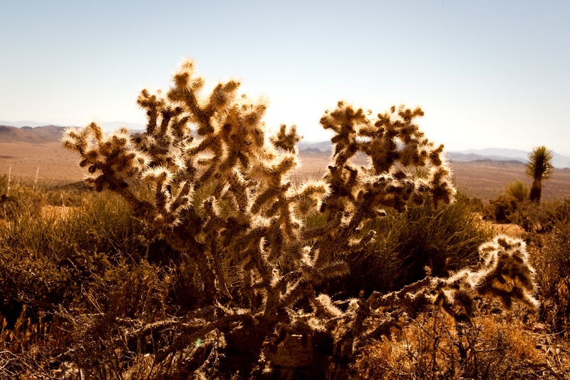 Hike to Ryan Mountain at Joshua Tree National Park