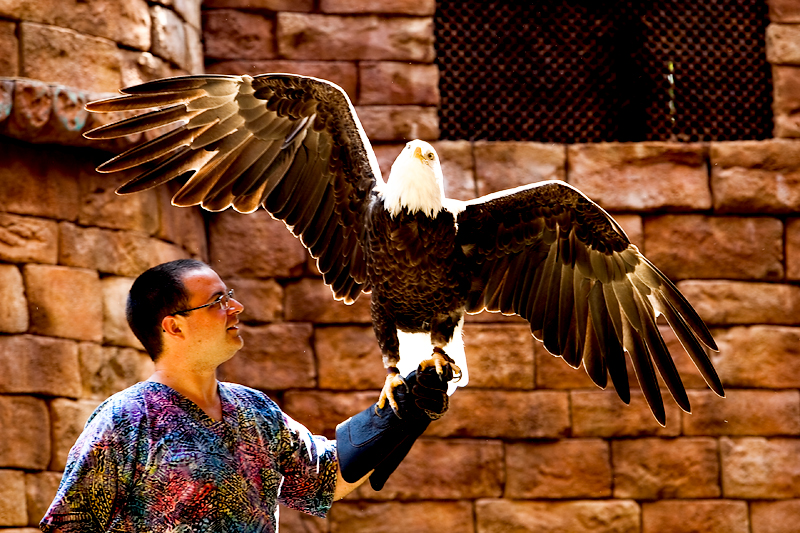 Flights of Wonder show in Animal Kingdom