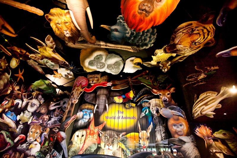 Animal Kingdom in Disney World.  Orlando, FL