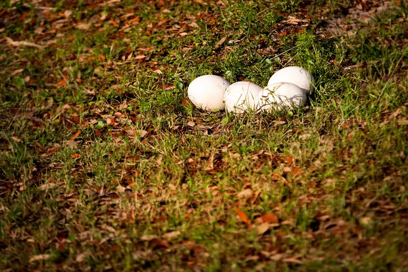 Ostrich Eggs at Animal Kingdom in Orlando, FL.  Brownie Bites - Travels & Experiences of Matt & Erin Browne