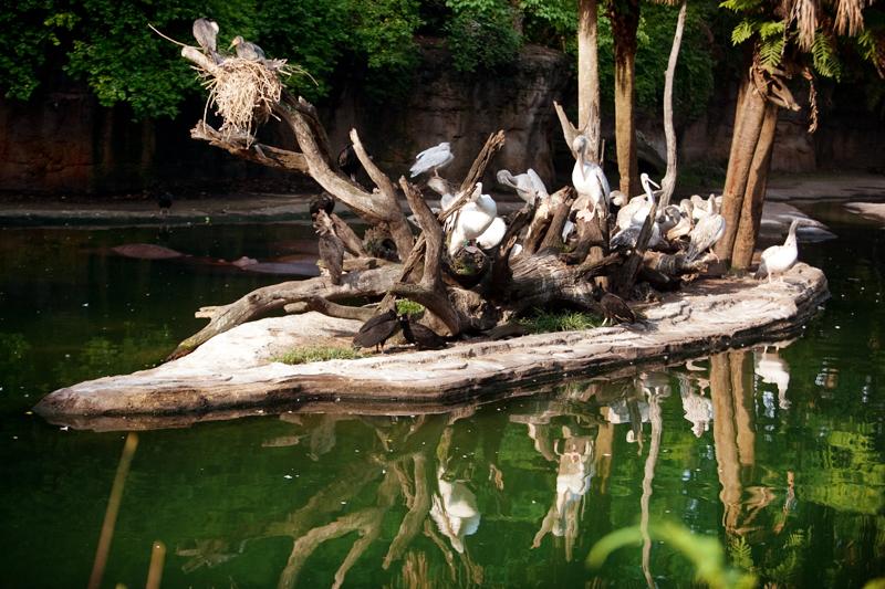 Birds at Animal Kingdom in Orlando, FL.  Brownie Bites - Travels & Experiences of Matt & Erin Browne