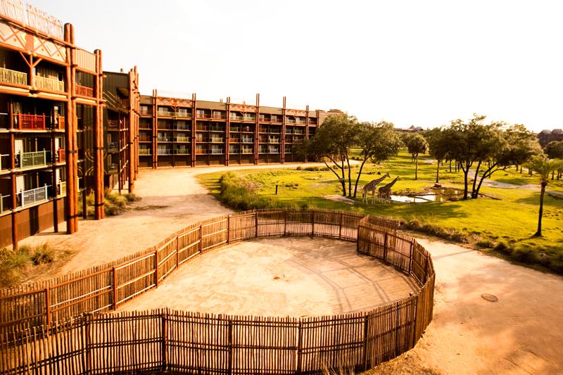animal kingdom lodge 7