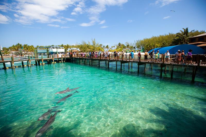 Blue Lagoon Island Sea Lion Encounter
