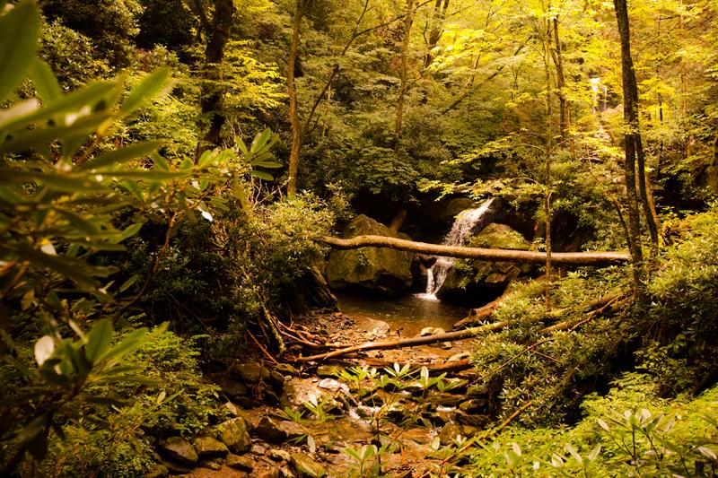Hiking the Trillium Gap Trail to Brushy Mountain in the Smoky Mountains