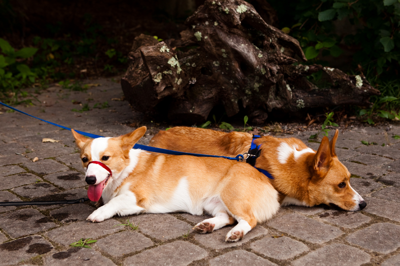 Dexter & Dewey taking a rest at Ijams Nature Center