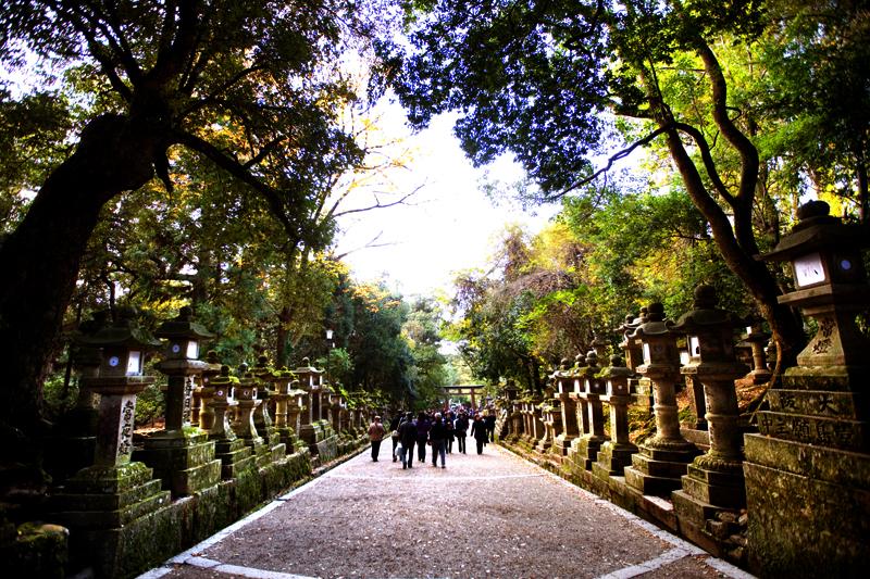 nara kasuga taisha shrine stone lanterns