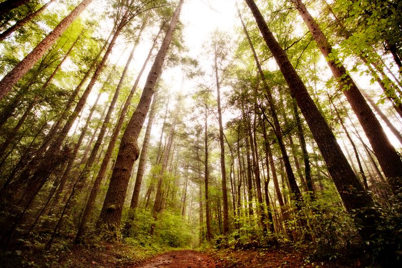 Smoky Mountain Little Bottoms Trail to Abrams Falls