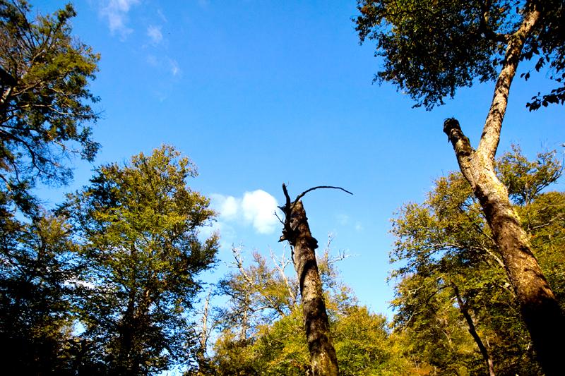 Hike to Mt. LeConte via Alum Cave Bluffs