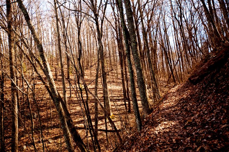 Lumber Ridge Trail Hike Smoky Mountains