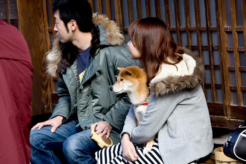 kiso valley tsumago dog