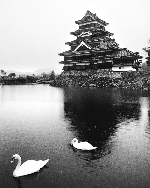 matsumoto castle crow
