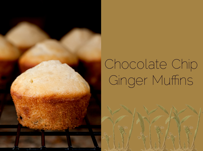 Chocolate chip muffins with crystallized ginger