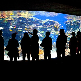 More from Easter weekend – Ripley's Aquarium