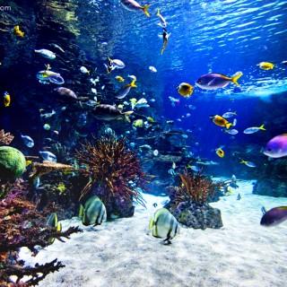 More Ripley's Aquarium of the Smokies Photos