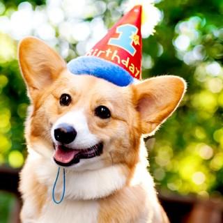 Dewey & Dash have a Birthday – Part 1