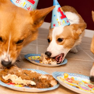 Dewey & Dash have a Birthday – Part 2
