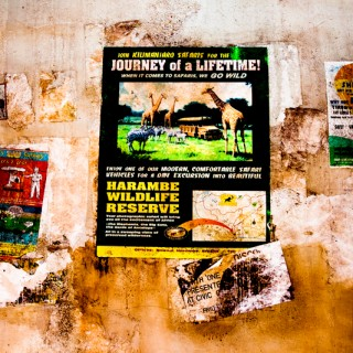 Animal Kingdom: Eat at Tusker House!
