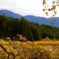 Kiso Valley Nakasendo Hike