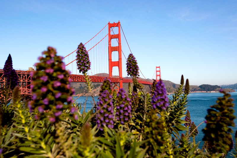 san-francisco-golden-gate-bridge-8