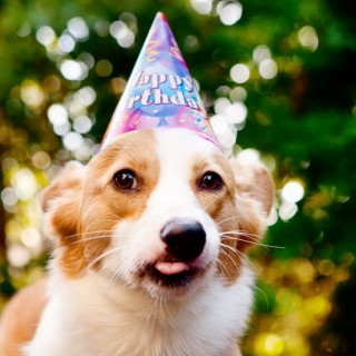 Corgi Birthday Party | Pupcake Recipe