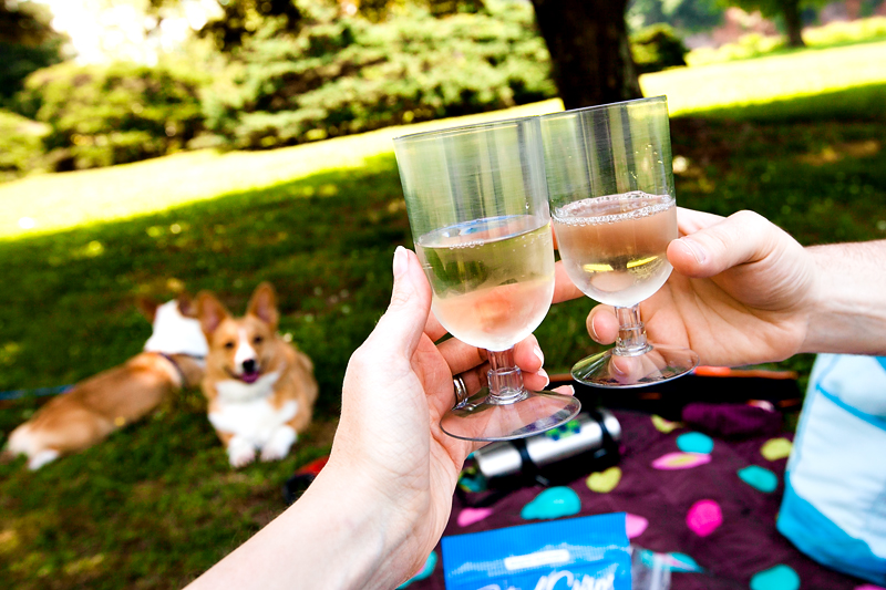 wine and corgis