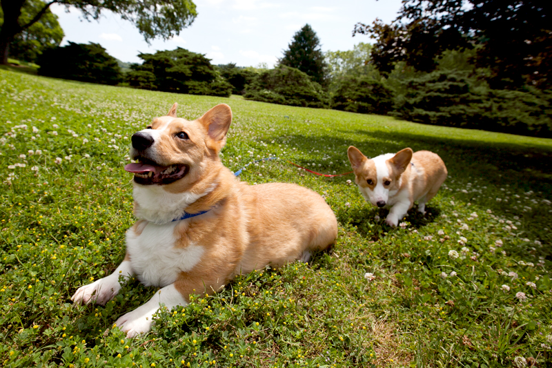 anniversary-with-cranberry-chicken-salad-pretzel-crisps-and-cute-corgis-12
