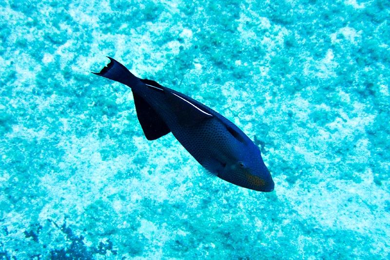 disney-fantasy-cruise-western-caribbean-snorkeling-in-cozumel-04