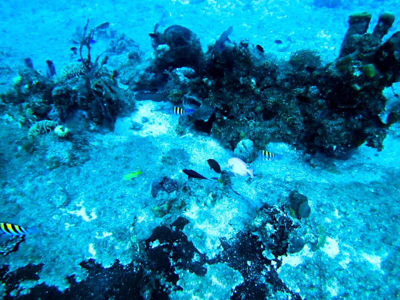 disney-fantasy-cruise-western-caribbean-snorkeling-in-cozumel-05