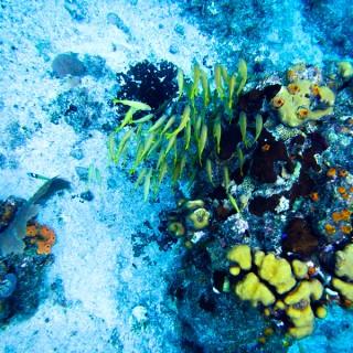 Disney Fantasy Cruise | Western Caribbean | Snorkeling in Cozumel!