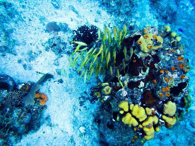 disney-fantasy-cruise-western-caribbean-snorkeling-in-cozumel-06