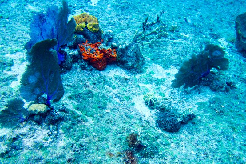 disney-fantasy-cruise-western-caribbean-snorkeling-in-cozumel-08