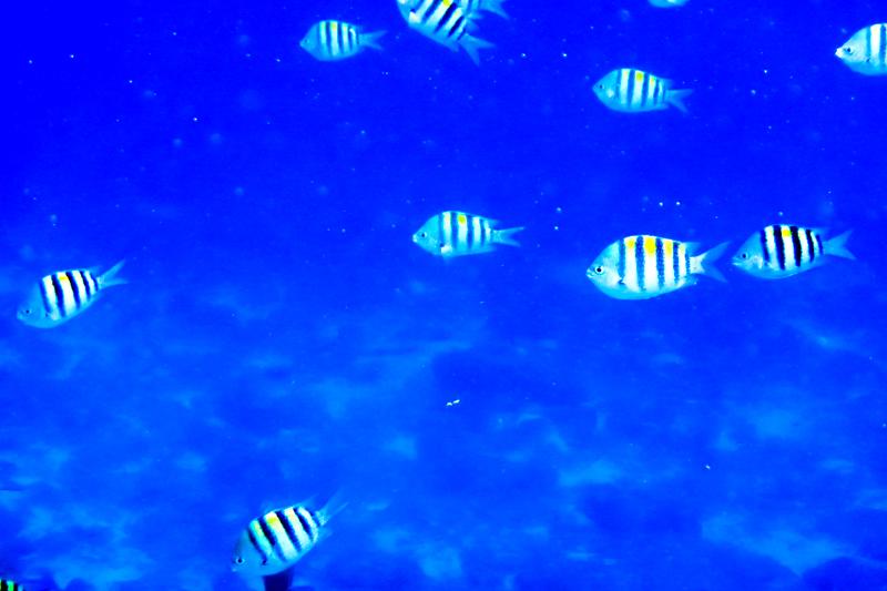 disney-fantasy-cruise-western-caribbean-snorkeling-in-cozumel-09