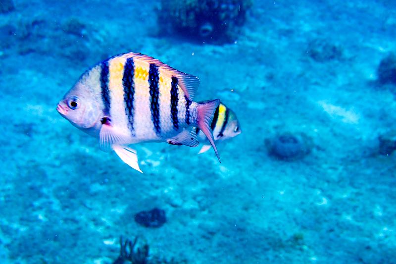 disney-fantasy-cruise-western-caribbean-snorkeling-in-cozumel-11