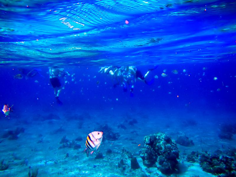 disney-fantasy-cruise-western-caribbean-snorkeling-in-cozumel-12