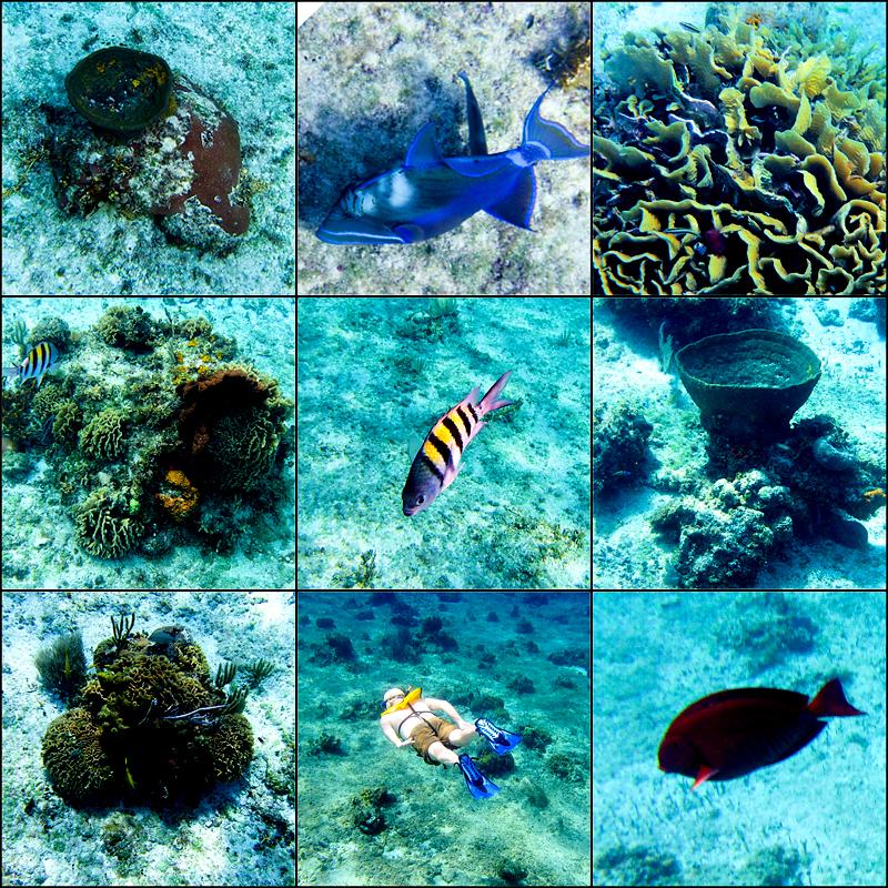 disney-fantasy-cruise-western-caribbean-snorkeling-in-cozumel-15