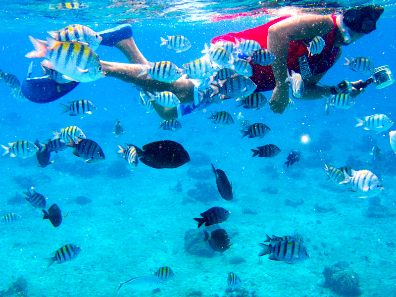 disney-fantasy-cruise-western-caribbean-snorkeling-in-cozumel-16