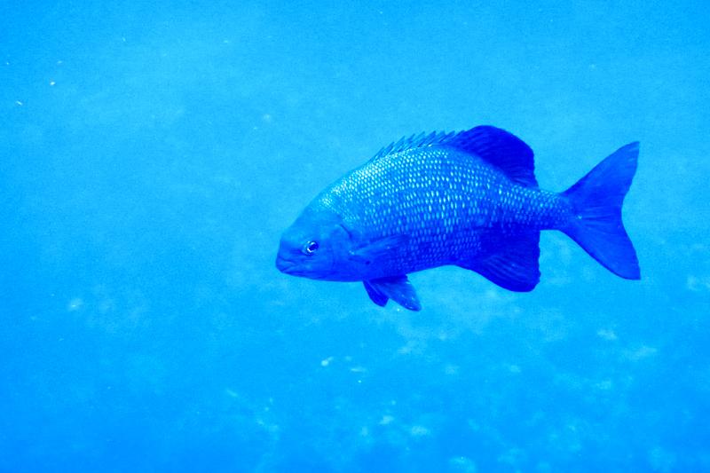 disney-fantasy-cruise-western-caribbean-snorkeling-in-cozumel-21