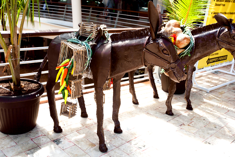 donkeys and chili peppers in cozumel