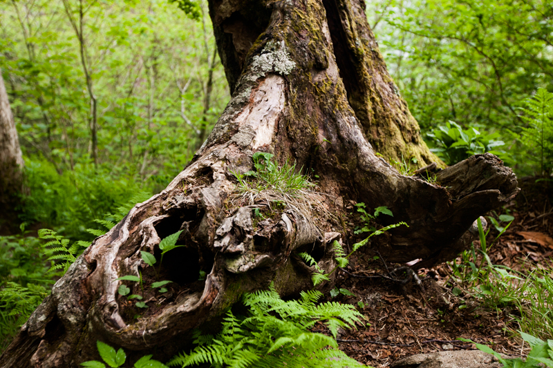 smoky-mountain-hiking-trails-charlies-bunion-04