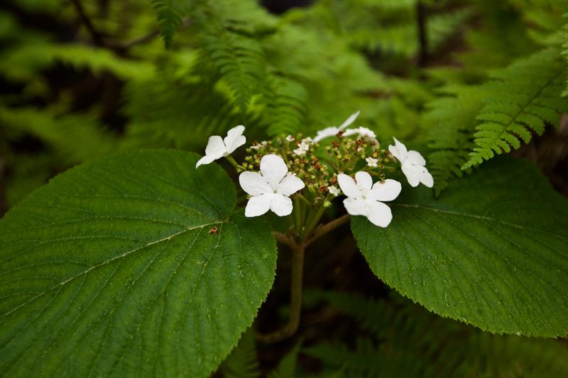 smoky-mountain-hiking-trails-charlies-bunion-05