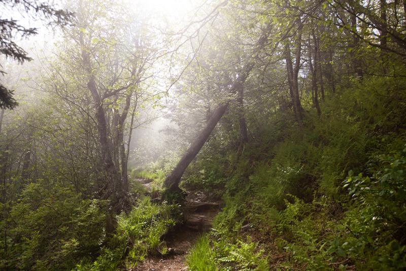 smoky-mountain-hiking-trails-charlies-bunion-06