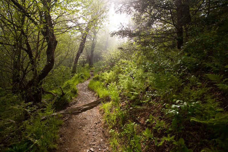 smoky-mountain-hiking-trails-charlies-bunion-07