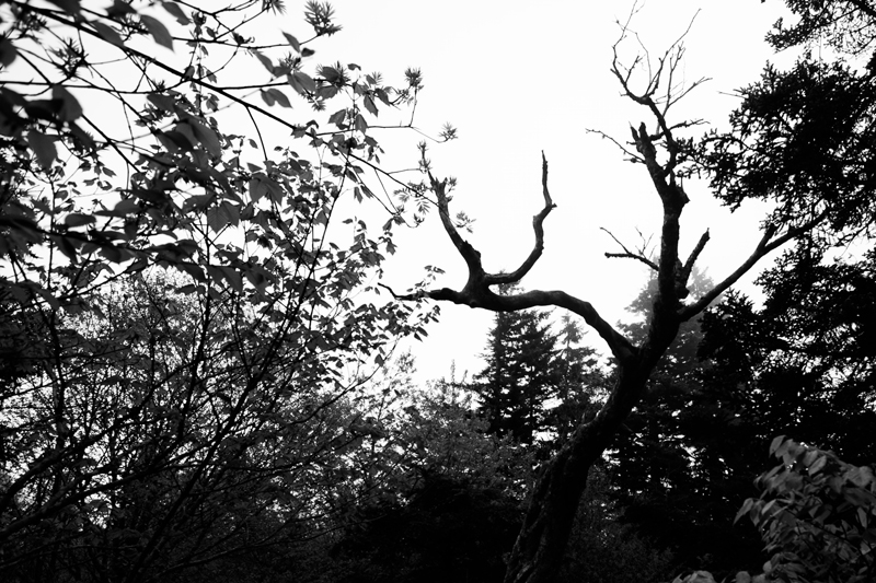smoky-mountain-hiking-trails-charlies-bunion-09