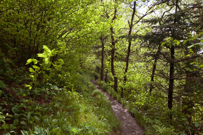 smoky-mountain-hiking-trails-charlies-bunion-20