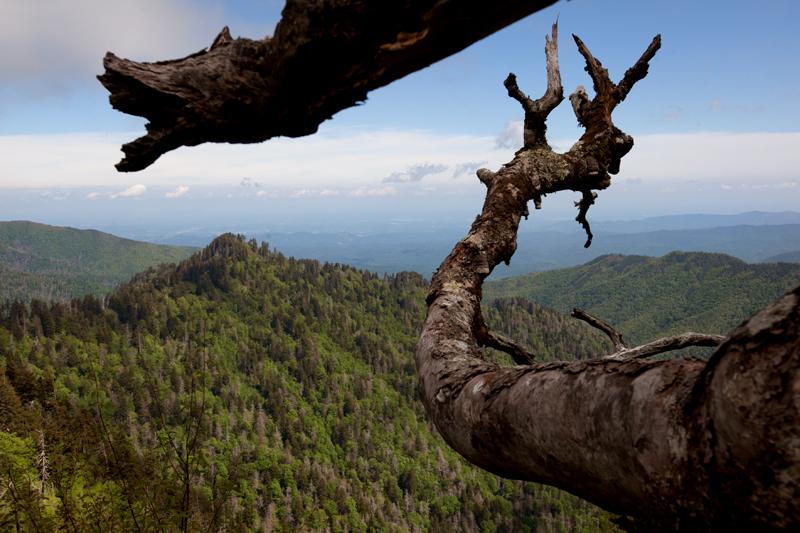 smoky-mountain-hiking-trails-charlies-bunion-23