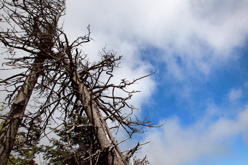 smoky-mountain-hiking-trails-charlies-bunion-26