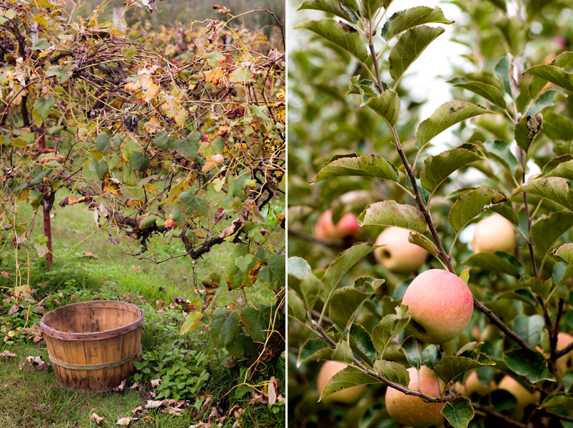 carver's-apple-orchard-cosby-tennessee-02