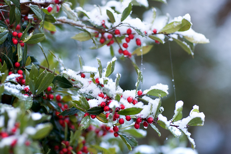 knoxville-tennessee-first-snow-2013-02