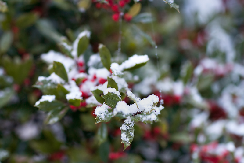 knoxville-tennessee-first-snow-2013-03