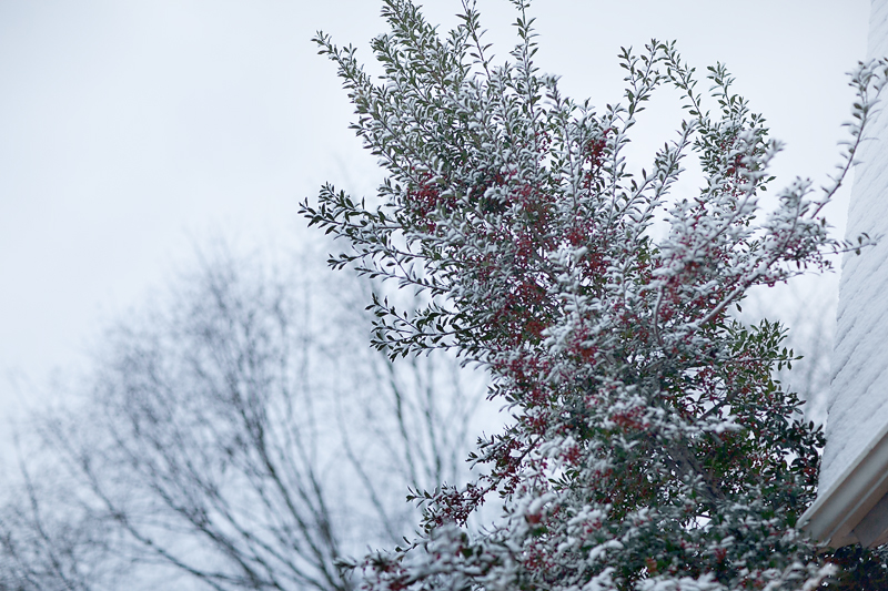 knoxville-tennessee-first-snow-2013-04